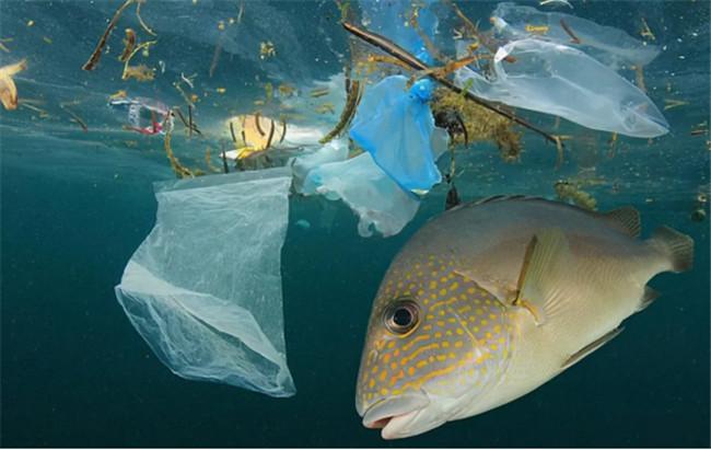 玻璃瓶的危害是塑料瓶的4倍,导致更多环境和健康问题