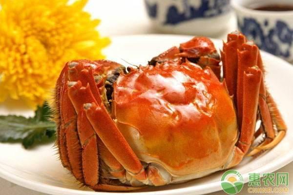 阳澄湖大闸蟹多少钱一只?如何保存?