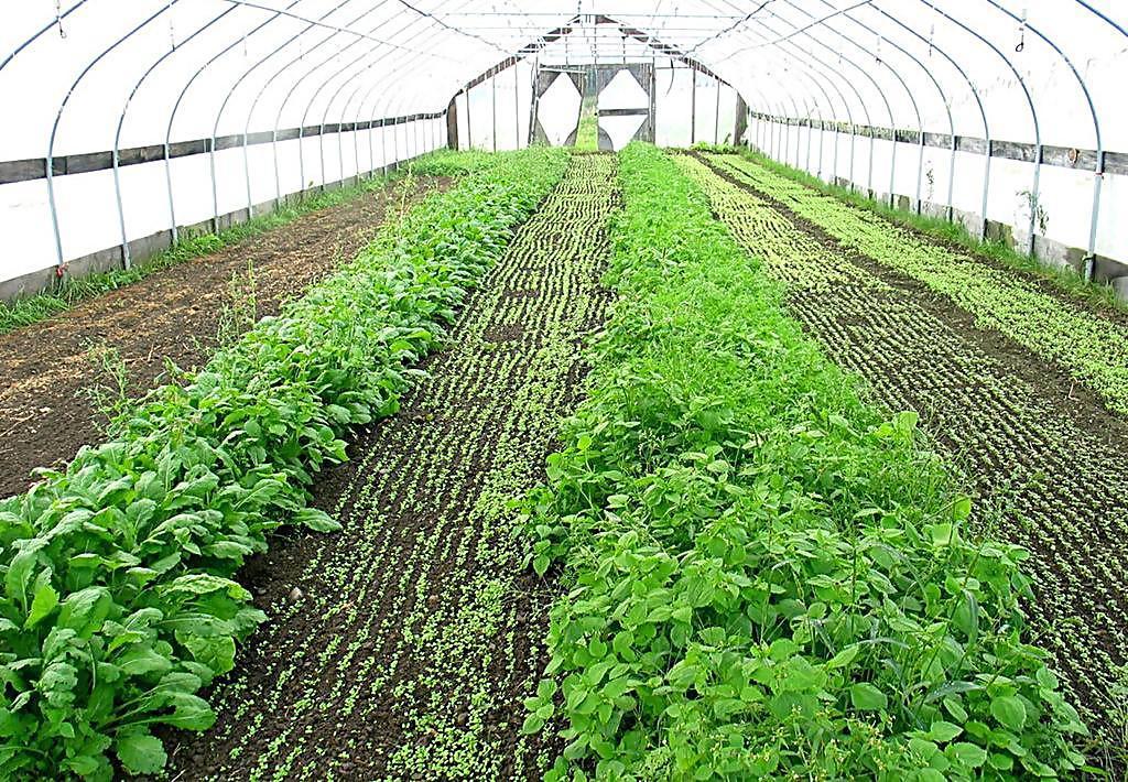 越冬低温条件下蔬菜大棚管理都理当留意些哪些?