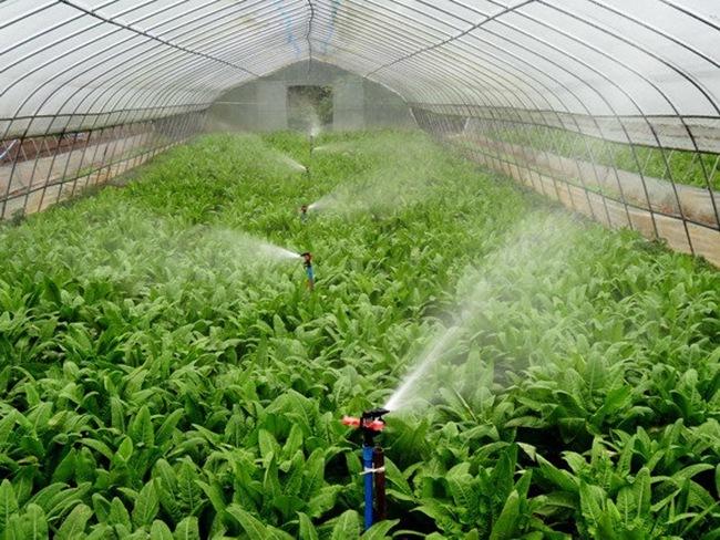 为何选择节水灌溉方式?有什么特点?