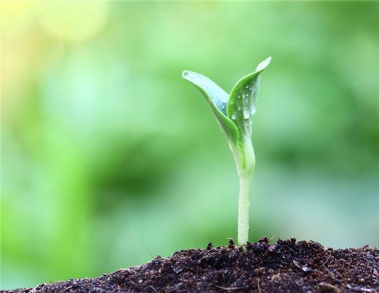 中小量水溶性肥料新时期来临,这类技术性你都知道吗?我共享,赶紧来了解一下吧!