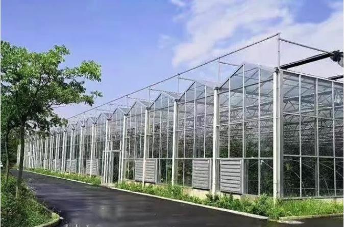 小编向大家讲解现代化智能温室大棚广泛的栽培方法有哪些?