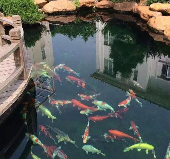 鱼池水处理5种计划方案为您解除水清鱼悦的密秘