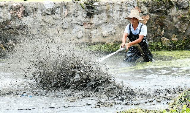 农村一66岁老人,6年清淤2000个池塘,年赚超百万!