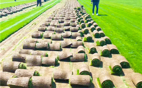 详谈草坪的建植与维护保养,病虫害防治以及草坪的修补升級
