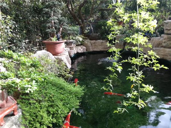 来看看庭院假山鱼池设计的核心要点都有哪些,你知道吗?
