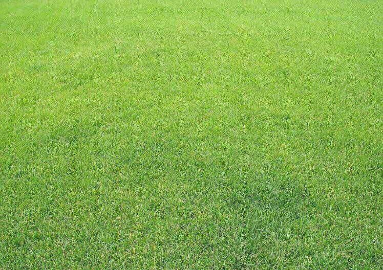 草坪厂家告诉你草坪的挤压成型作用和四大注意事项