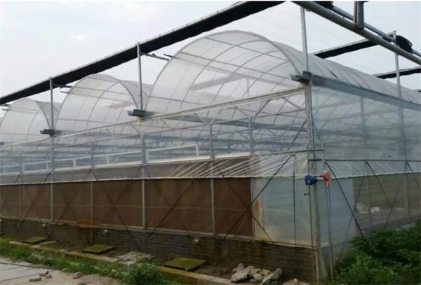 在建设连栋温室大棚时尽可能注意什么事项?